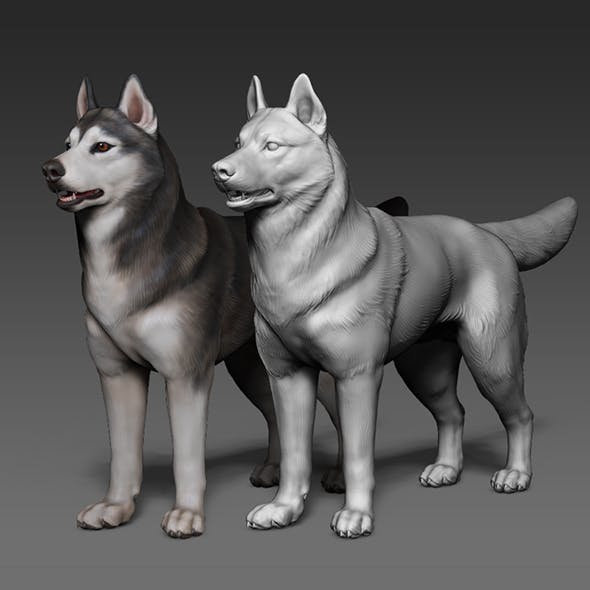 Siberian Husky, high polygon 3D model with polypaint - 3DOcean Item for Sale