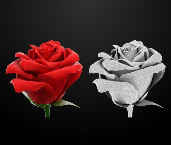 Red Rose - 3DOcean Item for Sale