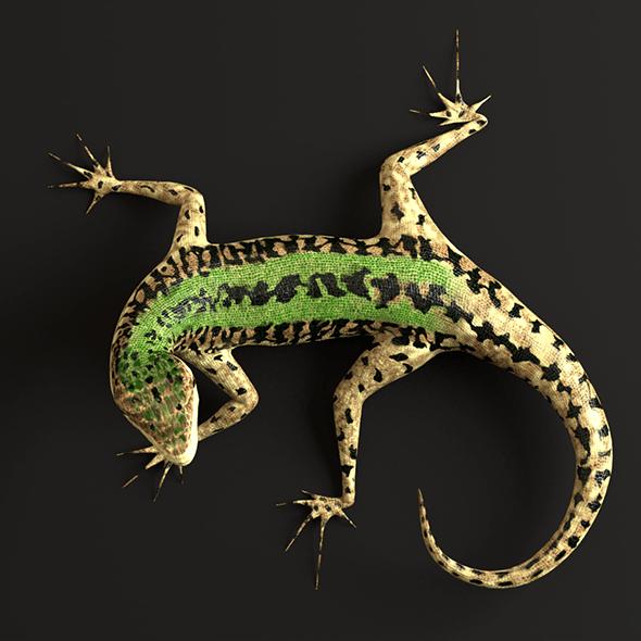 Green Lizard - Podarcis Sicula - 3DOcean Item for Sale