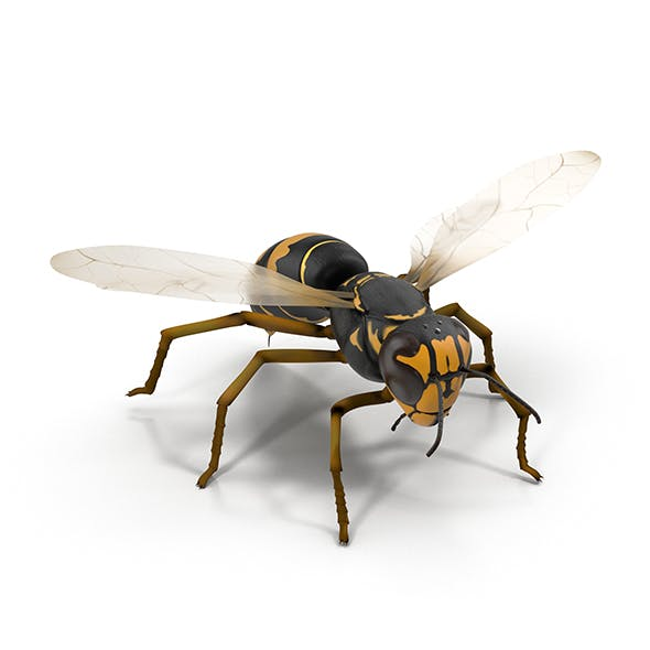 Wasp Vespula - 3DOcean Item for Sale