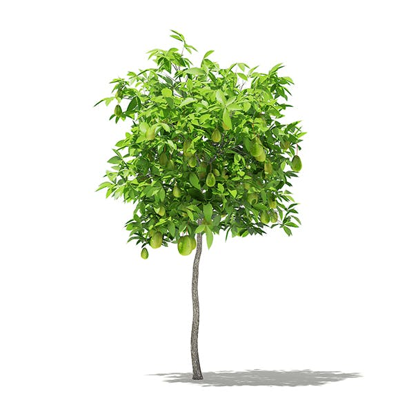 Avocado Tree with Fruits 3D Model 1.5m