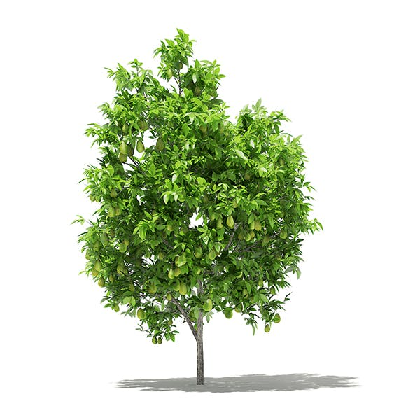 Avocado Tree with Fruits 3D Model 2.9m - 3DOcean Item for Sale
