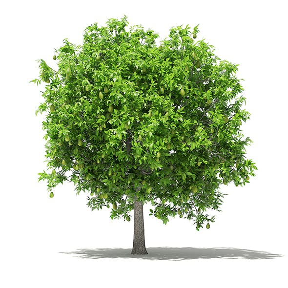Avocado Tree with Fruits 3D Model 3.8m - 3DOcean Item for Sale