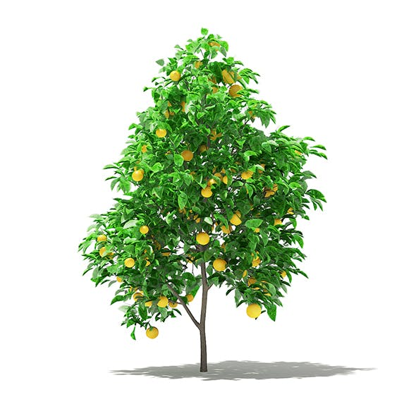 Grapefruit Tree with Fruits 3D Model 2.2m - 3DOcean Item for Sale