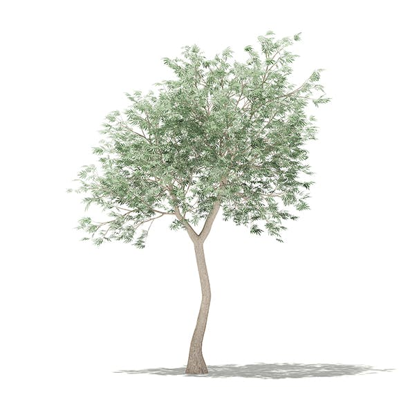 Olive Tree 3D Model 3m - 3DOcean Item for Sale