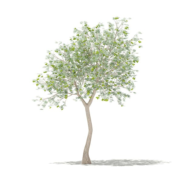 Olive Tree with Fruits 3D Model 3m