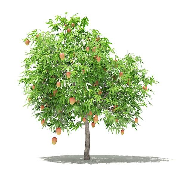 Mango Tree with Fruits 3D Model 2.6m