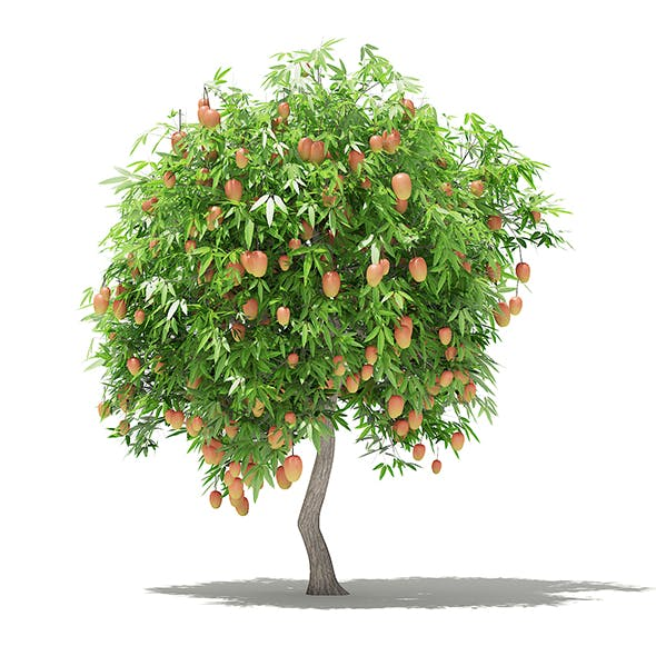 Mango Tree with Fruits 3D Model 2.7m - 3DOcean Item for Sale