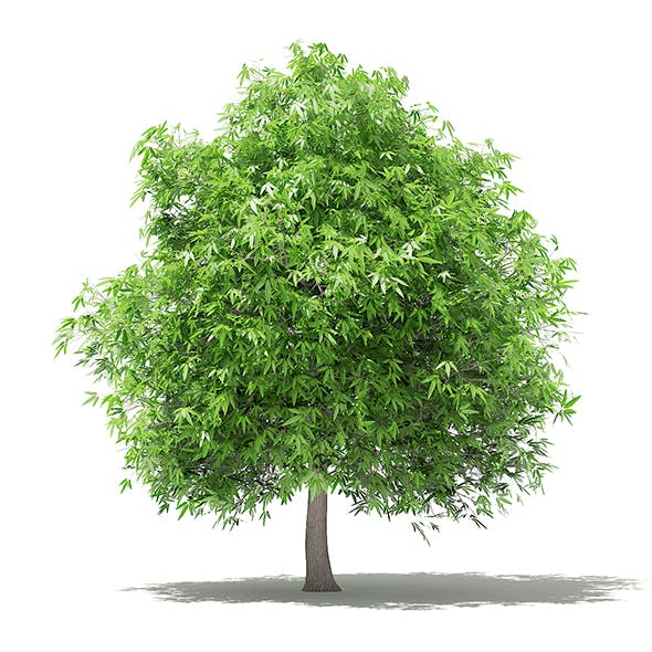Mango Tree 3D Model 4m