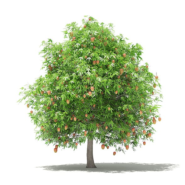 Mango Tree with Fruits 3D Model 4m - 3DOcean Item for Sale