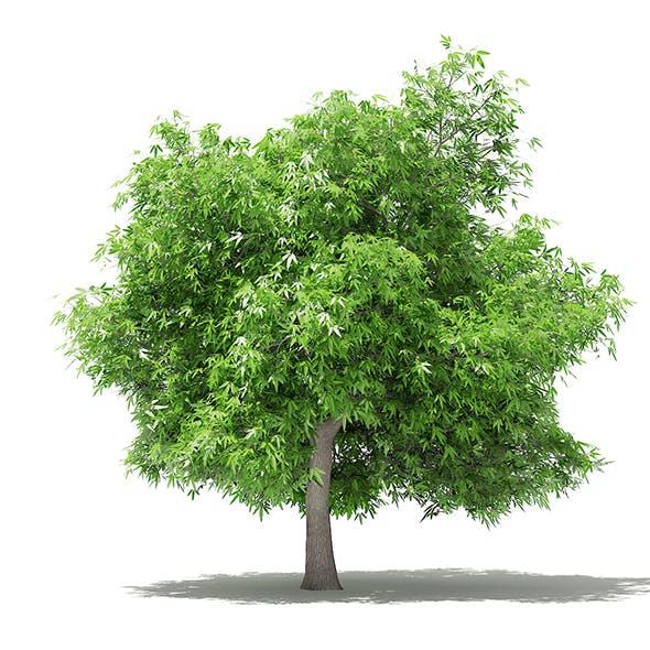 Mango Tree 3D Model 4.8m - 3DOcean Item for Sale