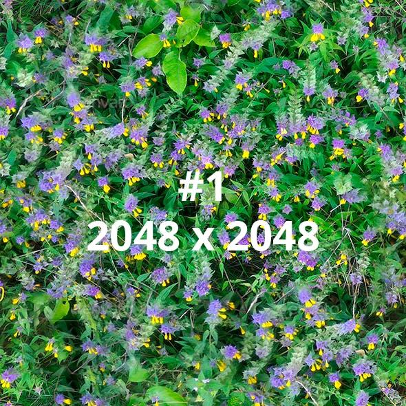 2 Field Flowers