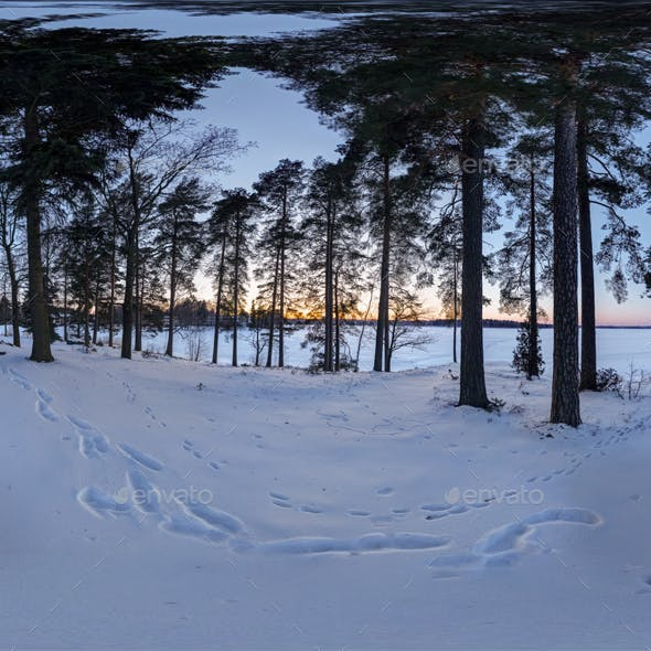 HDRI - Winter Sunset in the Forest - 3DOcean Item for Sale