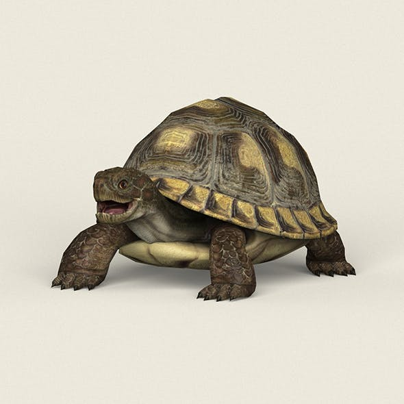 Game Ready Tortoise - 3DOcean Item for Sale
