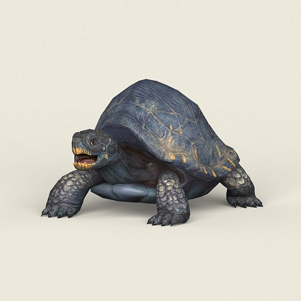 Game Ready Mountain Turtle - 3DOcean Item for Sale
