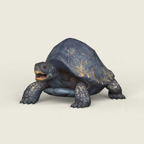 Game Ready Mountain Turtle