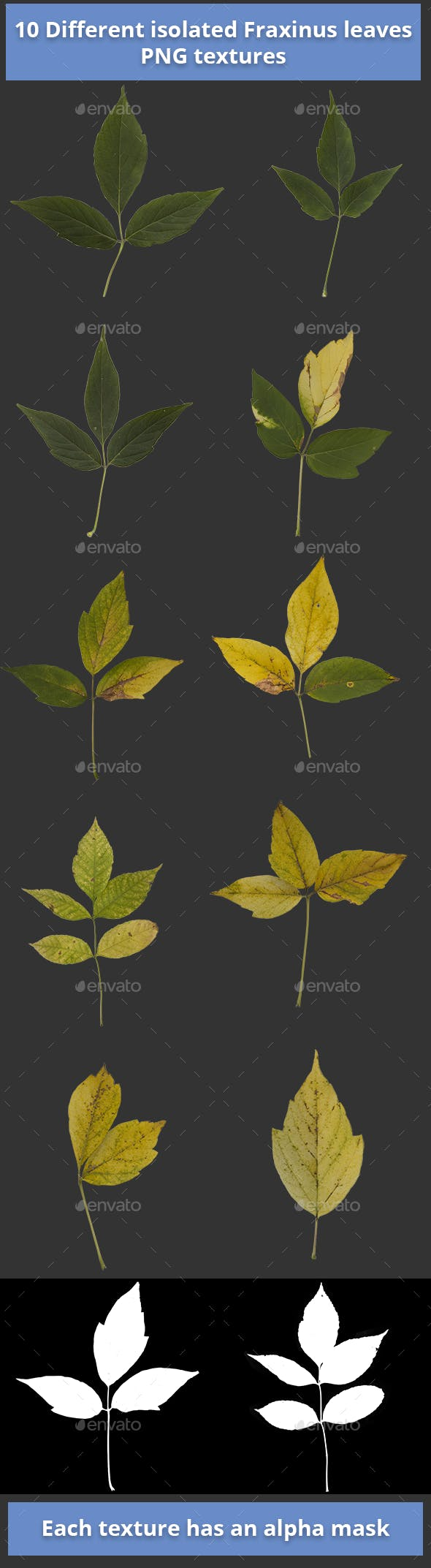 Pack of 10 Isolated Fraxinus Autumn Leaves - 3DOcean Item for Sale