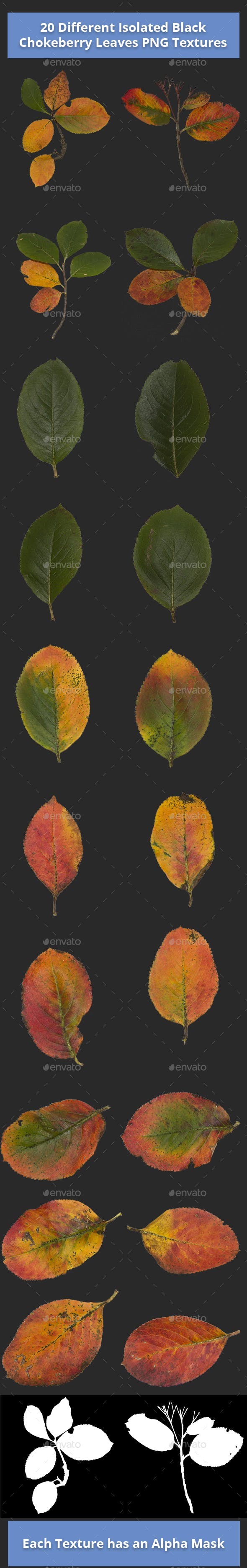 Pack of 20 Isolated Black Chokeberry Leaves Textures - 3DOcean Item for Sale