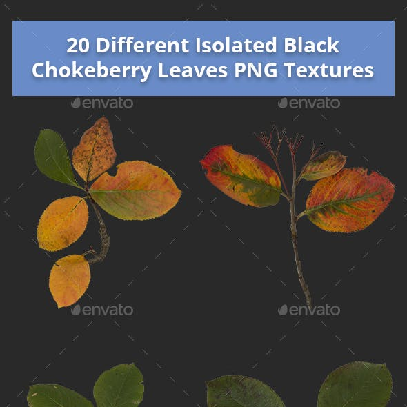 Pack of 20 Isolated Black Chokeberry Leaves Textures
