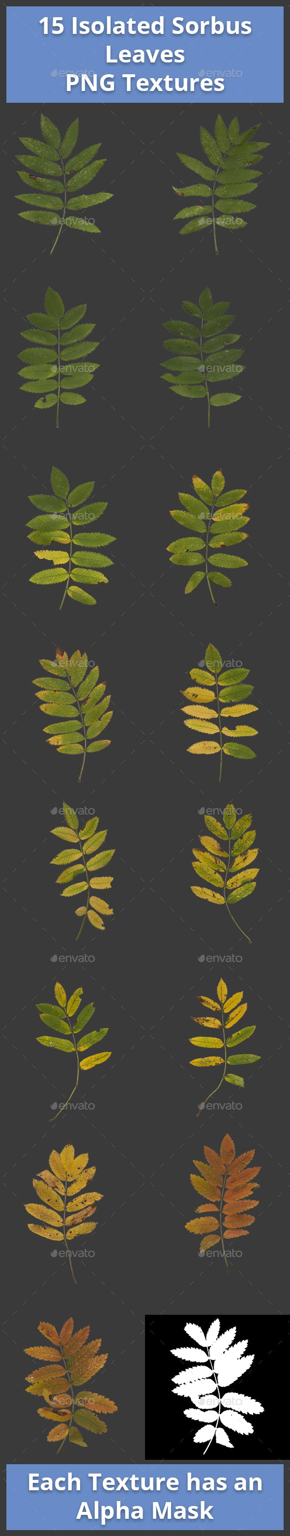 Pack of 15 Isolated Sorbus Leaves Textures - 3DOcean Item for Sale