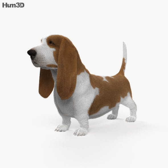 Basset Hound HD - 3DOcean Item for Sale
