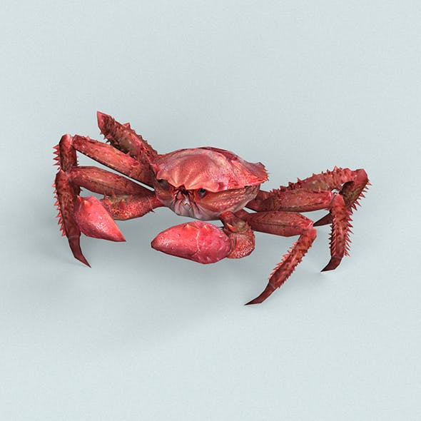 Christmas Island Red Crab - 3DOcean Item for Sale