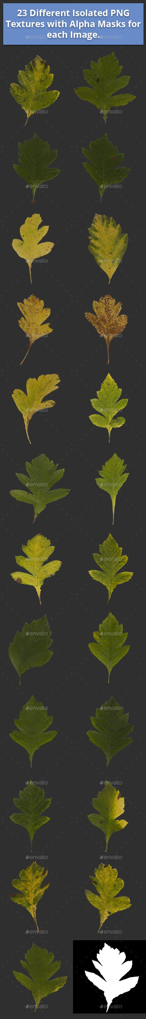 Pack of 23 Different Isolated Autumn and Summer Leaves - 3DOcean Item for Sale