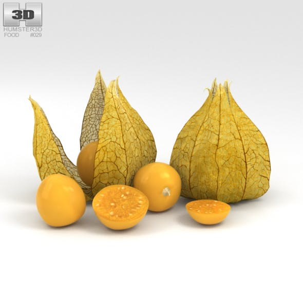 Physalis - 3DOcean Item for Sale