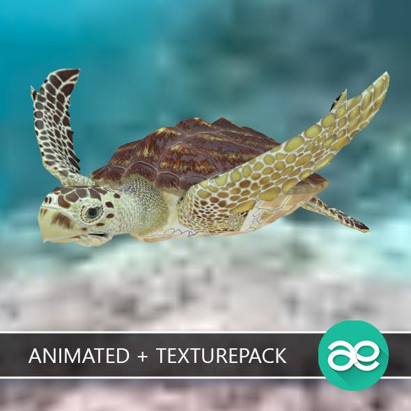 Animated Loggerhead sea turtle