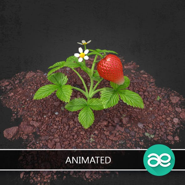 Strawberries Animated