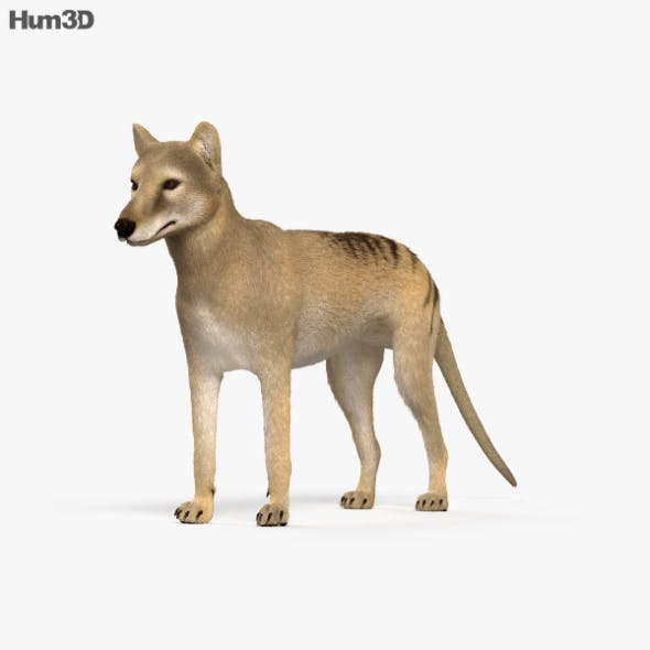 Thylacine HD - 3DOcean Item for Sale