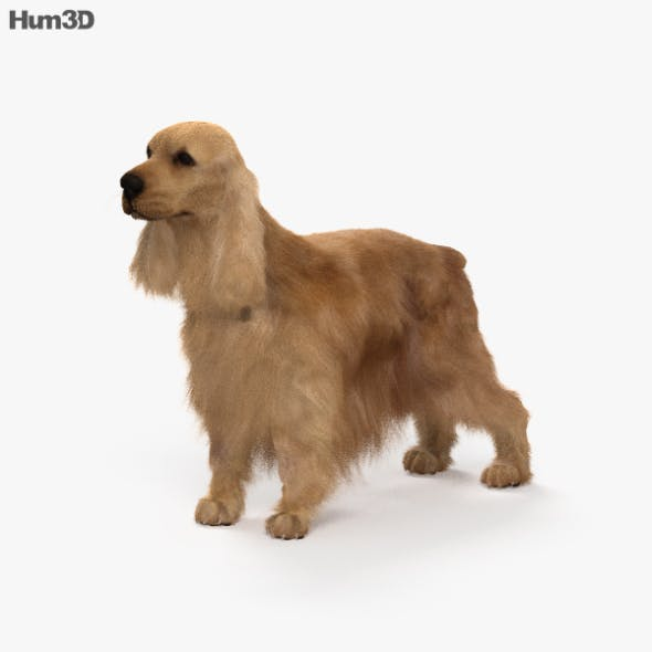 English Cocker Spaniel HD - 3DOcean Item for Sale