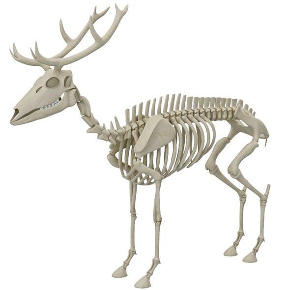 Deer Skeleton - 3DOcean Item for Sale