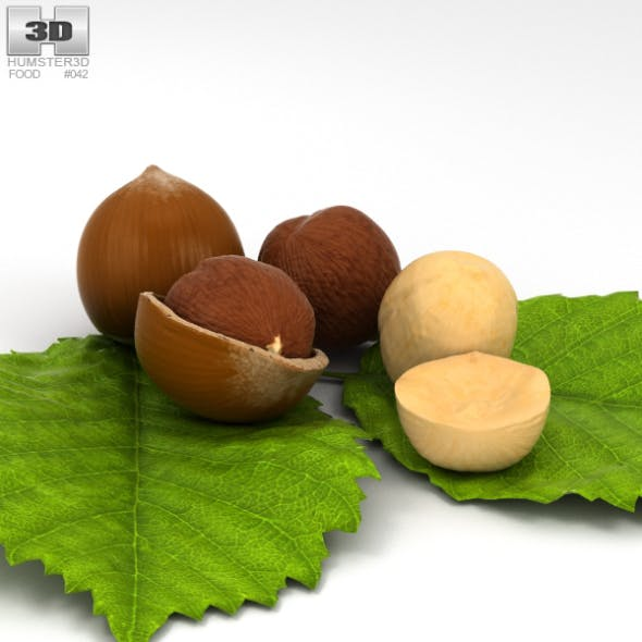 Hazelnut - 3DOcean Item for Sale