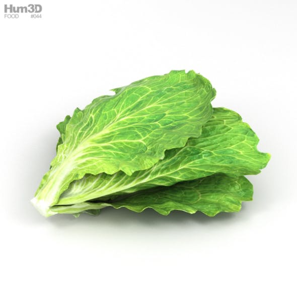 Lettuce - 3DOcean Item for Sale