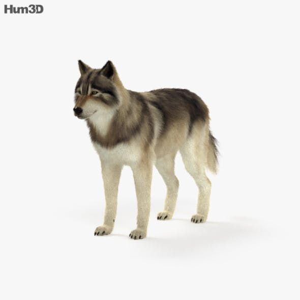 Gray Wolf HD - 3DOcean Item for Sale