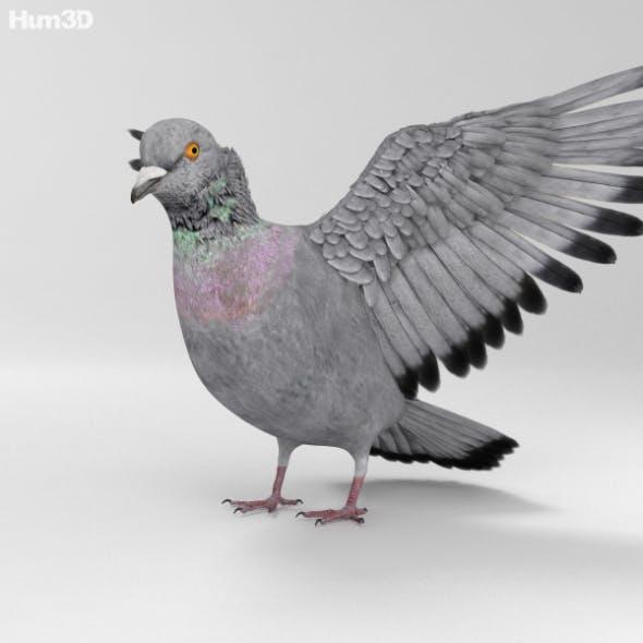 Rock Dove HD - 3DOcean Item for Sale