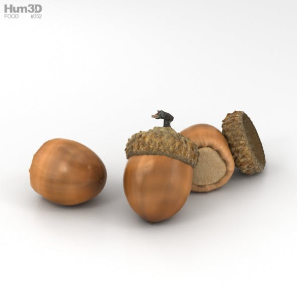Acorn - 3DOcean Item for Sale