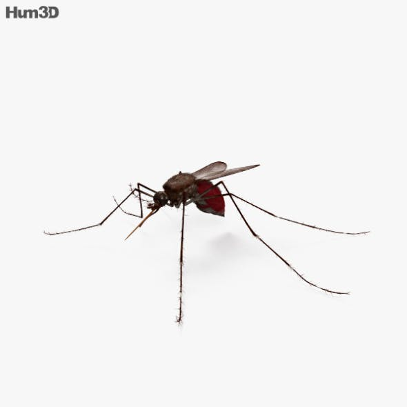 Mosquito HD - 3DOcean Item for Sale