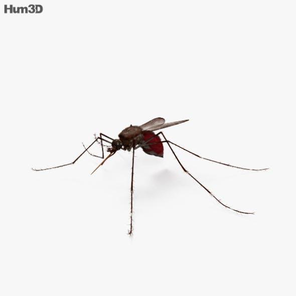 Mosquito HD