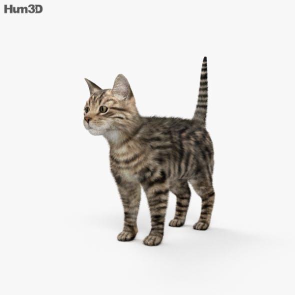 Cat HD - 3DOcean Item for Sale