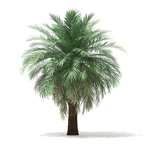 Butia Palm Tree 3D Model 4.5m - 3DOcean Item for Sale