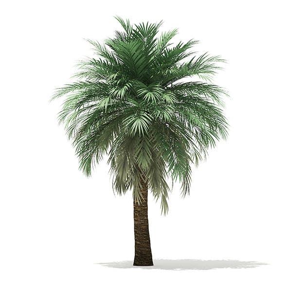 Butia Palm Tree 3D Model 5.2m - 3DOcean Item for Sale