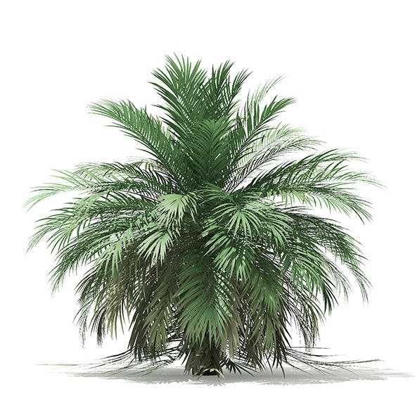 Butia Palm Tree 3D Model 3.5m - 3DOcean Item for Sale