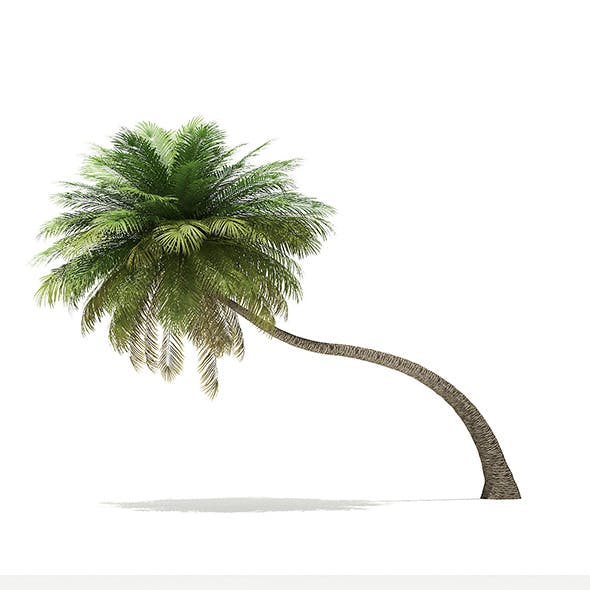 Coconut Palm Tree 3D Model 6.5m - 3DOcean Item for Sale
