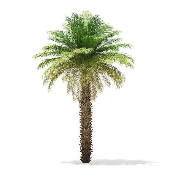 Date Palm Tree 3D Model 7m - 3DOcean Item for Sale