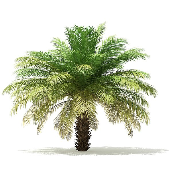 Date Palm Tree 3D Model 4m - 3DOcean Item for Sale