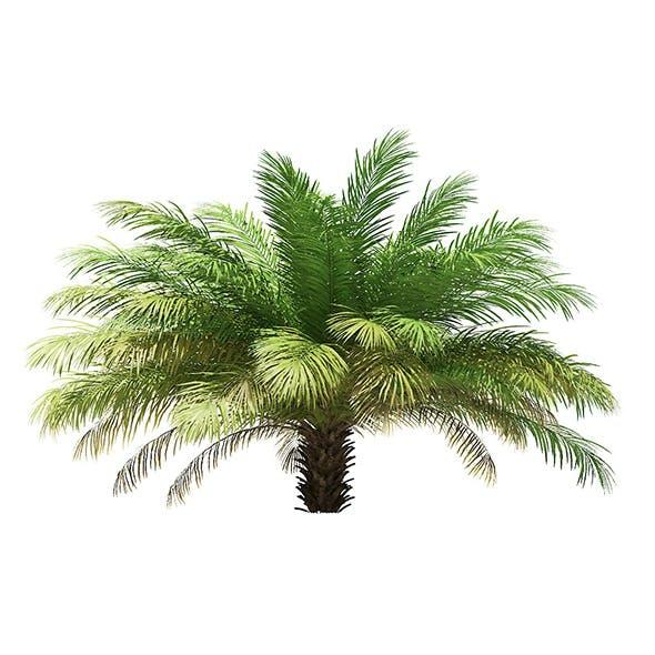 Date Palm Tree 3D Model 2.5m - 3DOcean Item for Sale