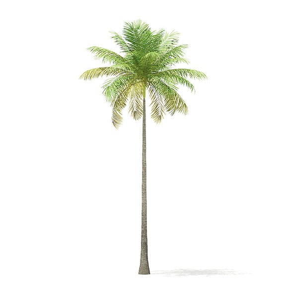 Bottle Palm Tree 3D Model 8m - 3DOcean Item for Sale