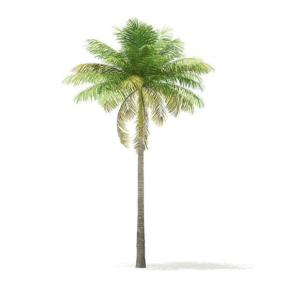 Bottle Palm Tree 3D Model 7m